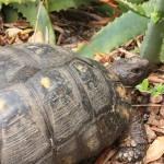 M's garden turtoise