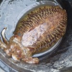 Cuttlefish, nom nom nom