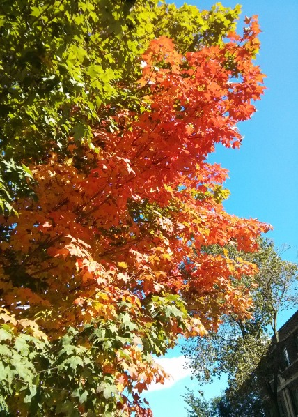 The first sign of fall in Toronto